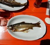trout-371264__180